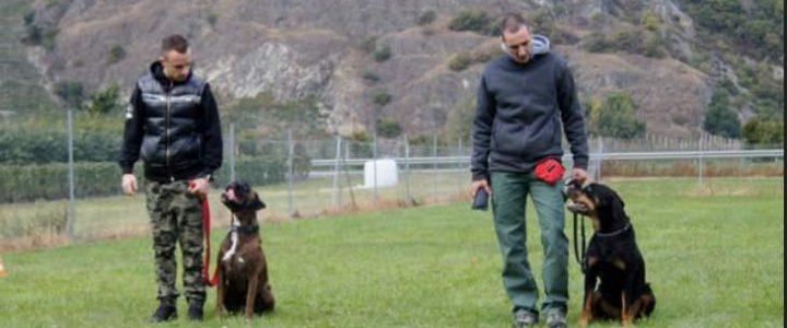 dresser son chien ou éduquer?